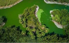Bubali plas (wetlands) – Bird Sanctuary – Bron: Aruba.com